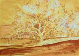 Bones of the Cork Tree