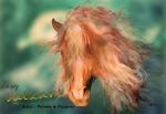 A horse called Copper