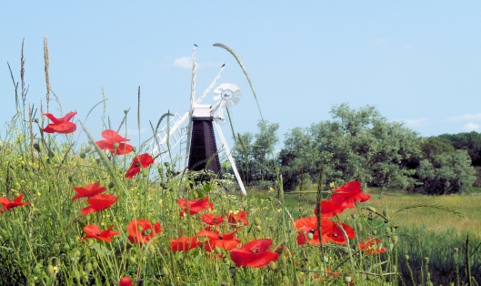 A windmill two crows and poppies