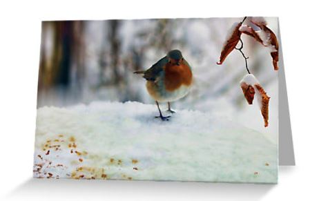 Robin redbreast card