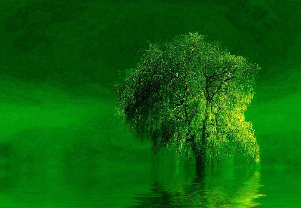 Sienna & Terre verde by Valerie Anne Kelly (2/6)