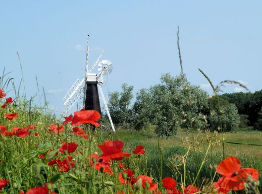 Windmill with Crow and Poppies