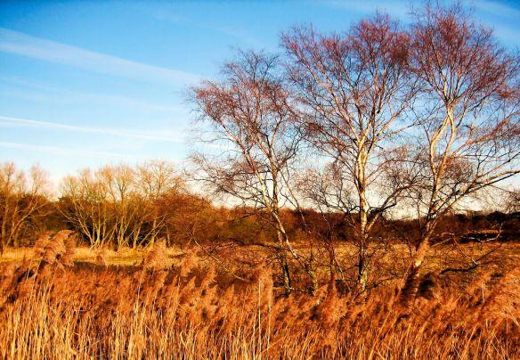 Waveney marshes