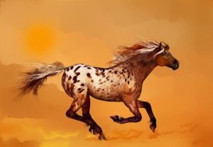 An Apaloosa called Ginger